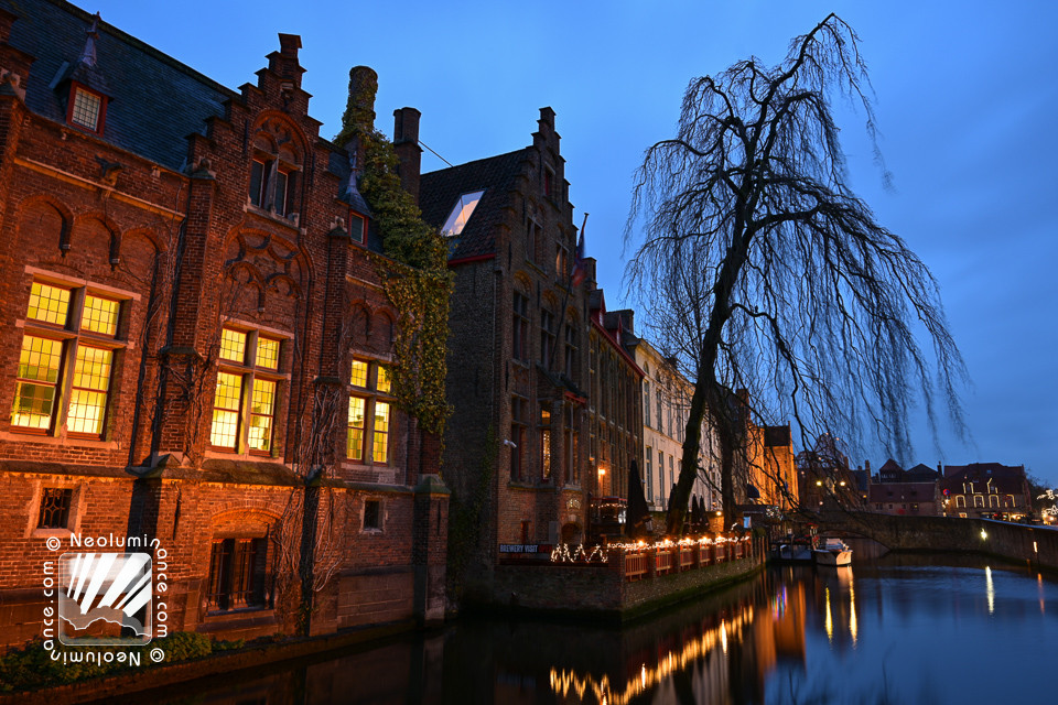Bruges Canal Tree