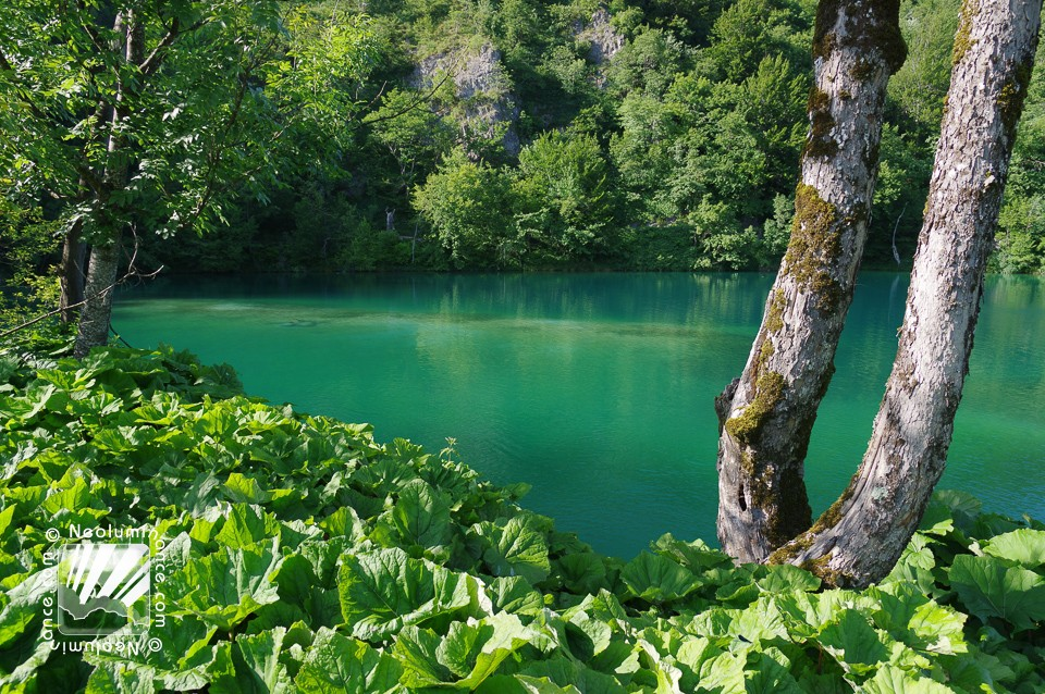 Plitvice Green Lake